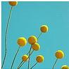 yalom userpic