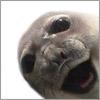 тюленька