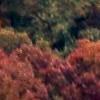 treeIcon01