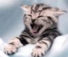 felinefriends userpic