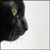 black_cat_3
