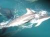 olphoto, dolphin