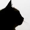 black_cat_2