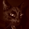 jthinktoomuch: My Cat