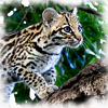 ocelot_summer userpic