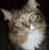 Джеки Чан ( кот)