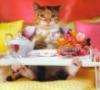 Завтрак кошечке в постель..
