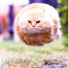 &fat kat :3