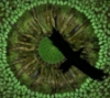 griccio userpic