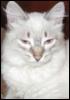 chelyba userpic