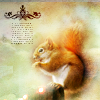 Animals: Squirrel